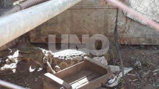 Lo atraparon. El reptil se introdujo en un gallinero y nadie sabe como llegó al lugar.