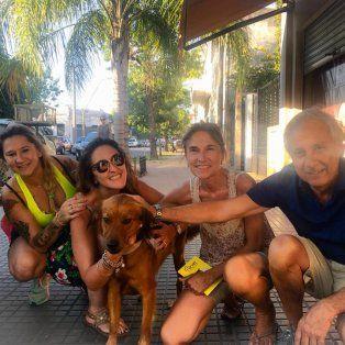 macetita, otro perro callejero que encontro una familia