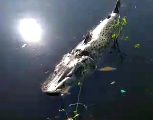 ¿Por qué se mueren los peces en los ríos de Santa Fe?