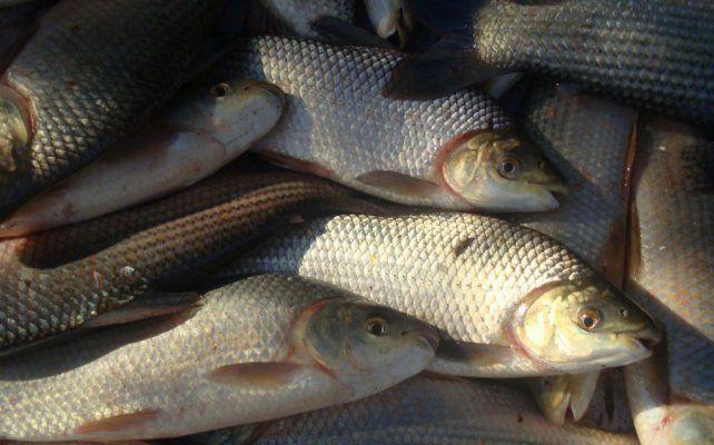 Ante la aparición de peces muertos, recomendaciones para un consumo seguro
