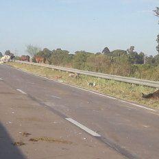 Un camión chocó y mató a cinco caballos en la Circunvalación oeste