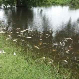 recomiendan manejo sustentable para mitigar la mortandad de peces