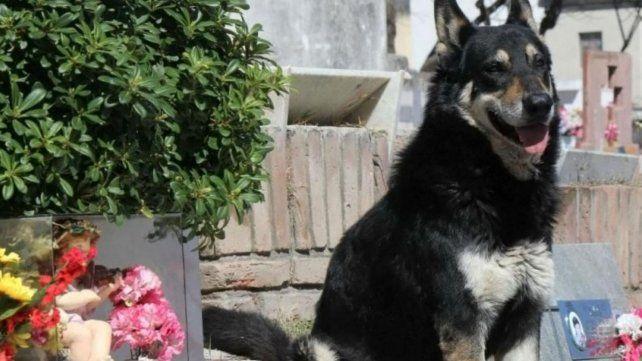 Murió Capitán, el perro que durante 10 años visitó la tumba de su dueño