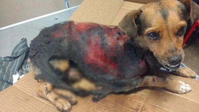 Indignación por otro perro muerto por mutilaciones en Córdoba