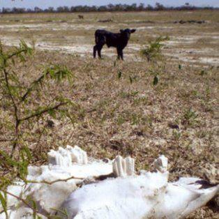 precipitaciones y temperatura: ¿que se espera para el trimestre marzo-abril-mayo?