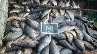 Secuestraron 1.325 sábalos y cientos de metros de redes de pesca