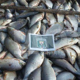 secuestraron 1.325 sabalos y cientos de metros de redes de pesca