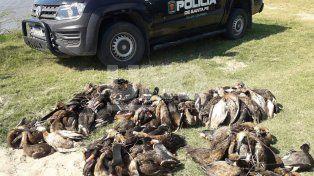 Secuestraron 134 patos crestones cazados en Campo Andino