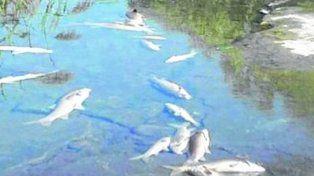 La contaminación no causó la mortandad de peces