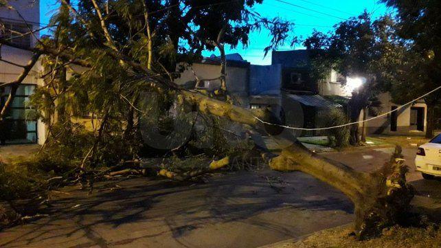 Un árbol cayó sobre Iturraspe