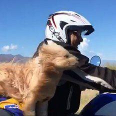 Conocé a Pocho, el perro motoquero que recorre el país