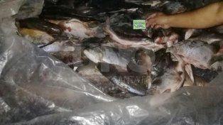 secuestraron 200 sabalos fuera de medida, sin cadena de frio y en pesimas condiciones de higiene