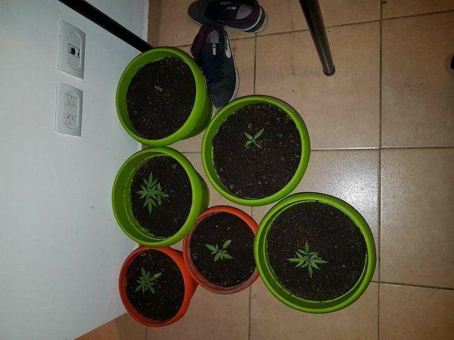 Tiene 16 años y lo apresaron porque llevaba plantas de marihuana en su mochila