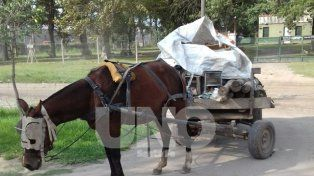 En un carro. Allí los delincuentes escondieron los postes robados.