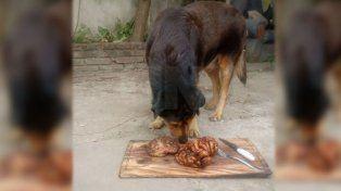 Santafesino viral: su perro cumplió 15 años y se lo festejó con un asado