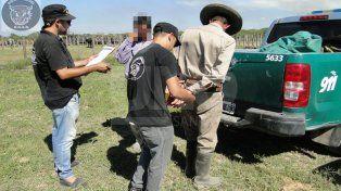 Arrestaron al encargado de un establecimiento rural y secuestraron 22 vacunos