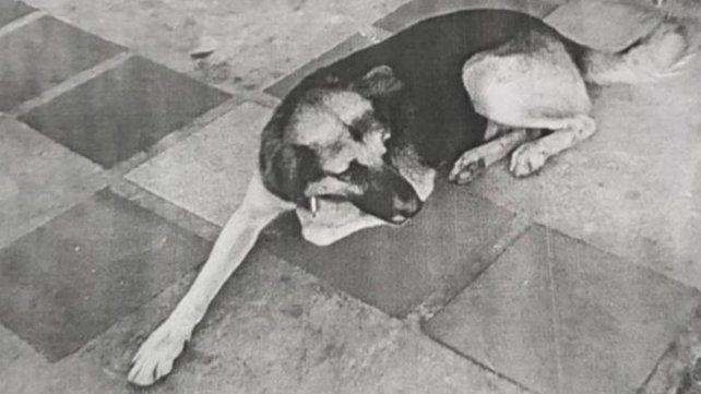 Un juez ordenó detener a un perro en Misiones