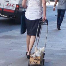 Soy vago y qué, el perrito santafesino que es furor en las redes sociales