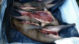 Secuestraron tres carpinchos muertos a un cazador furtivo