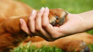 ¿Por qué hoy es el Día del Animal?