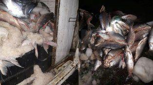 Secuestraron e incineraron casi media tonelada de sábalos depredados