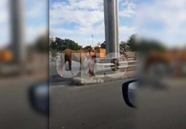 El VIDEO de un lector indignado por el maltrato animal