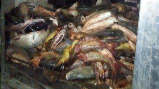 Secuestraron más de media tonelada de pescados depredados