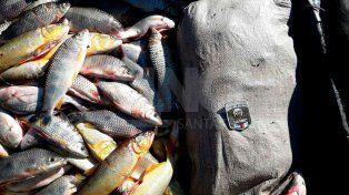 Secuestraron más de dos toneladas de pescados depredados en el río