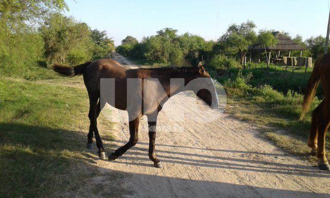 Recuperaron y devolvieron a sus dueños cinco caballos robados