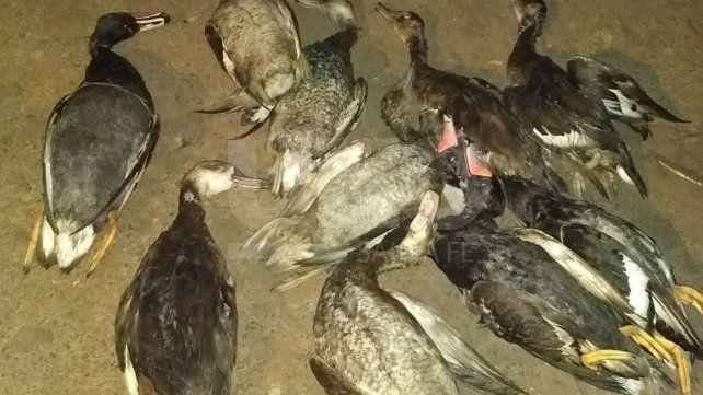 Demoraron a un depredador de la fauna silvestre y le secuestraron un arma de fuego