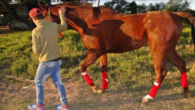 Rescataron en Vera un caballo de carrera robado en Entre Ríos
