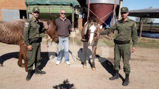 Apresaron a un cuatrero en Santa Fe y recuperaron dos caballos robados en Felicia
