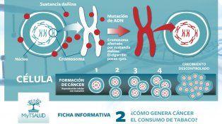 Cómo actúa el tabaco en la generación de cáncer