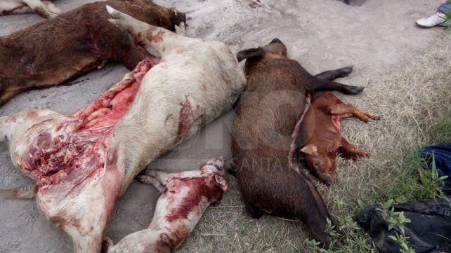 Sorprendieron a cazadores furtivos con siete chanchos faenados