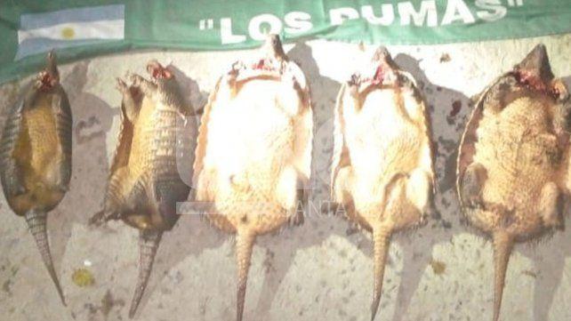 Secuestraron cinco animales de la fauna autóctona a un depredador