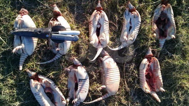 Secuestraron especies autóctona de caza prohibida