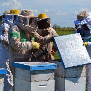 En Santa Fe hay 1.600 familias que se dedican a la apicultura.