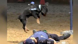Un perro que hace RCP y es furor en la web