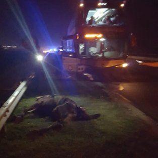 Dos choques entre vehículos y caballos sueltos en la circunvalación oeste