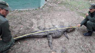 Sorprendieron a cazador que mató de un tiro en la cabeza a un yacaré