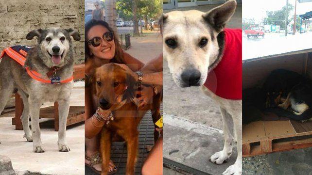 Día del Perro Callejero: las historias más conmovedoras de callejeritos santafesinos