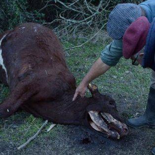 otra vez  se conocieron ataques del chupacabras en el norte santafesino