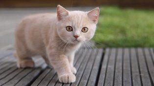 Día Internacional del Gato: ¿sabías que ver videos de gatitos es bueno para la salud?
