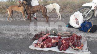 Secuestraron especies autóctonas a un cazador furtivo en el norte santafesino