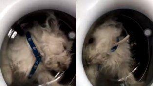 metio a su perrito en el lavarropas y lo subio a instagram