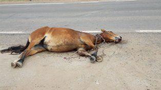Un veterinario examinó al caballo y constató su fallecimiento.