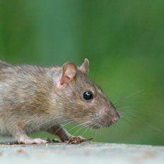 Misterio por una ratita con una planta en la espalda