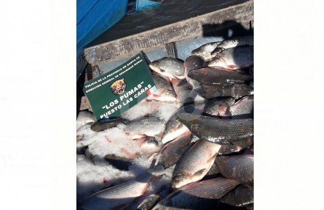Desnaturalizaron 350 sábalos que incautaron a depredador del río