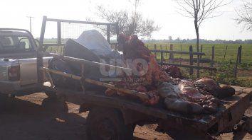 Abigeato: llevaban una vaca descuartizada sin documentación