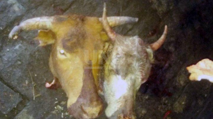 Los animales secuestrados.